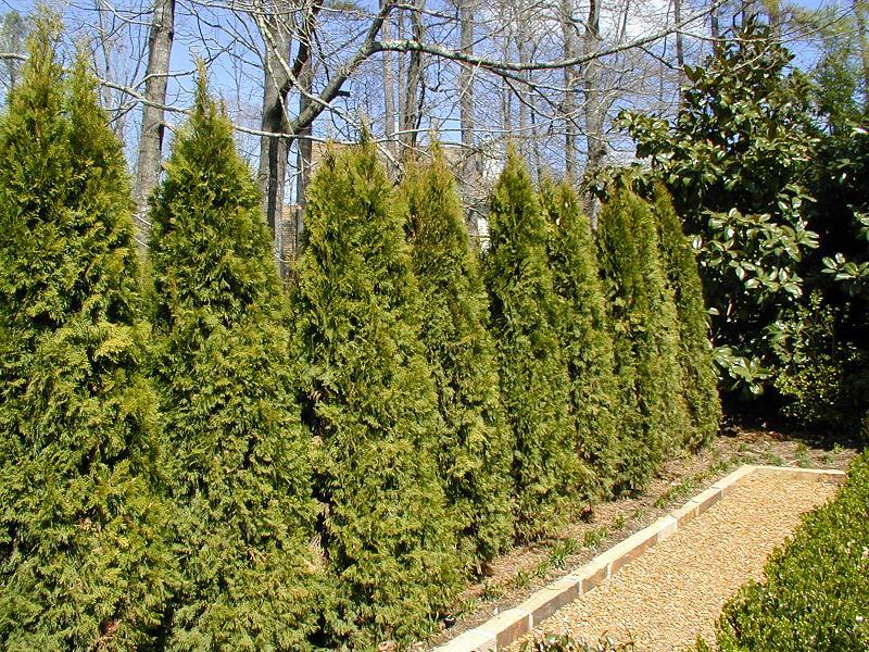 Georgia Gardener Newsletter Design Tip