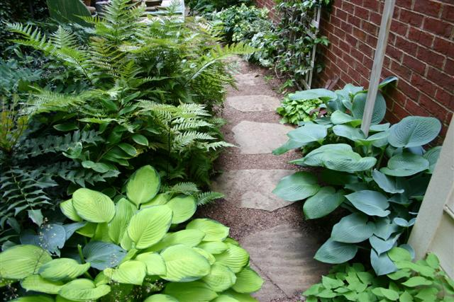 Landscaping With Ferns : Pathway with hostas and ferns green thumb planting