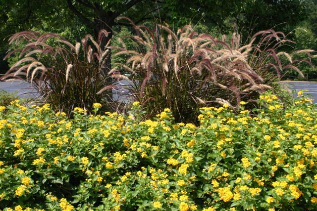 Eco Terra Landscape Consultants