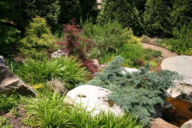Interior ideas dwarf conifer garden design for Mini garden landscape